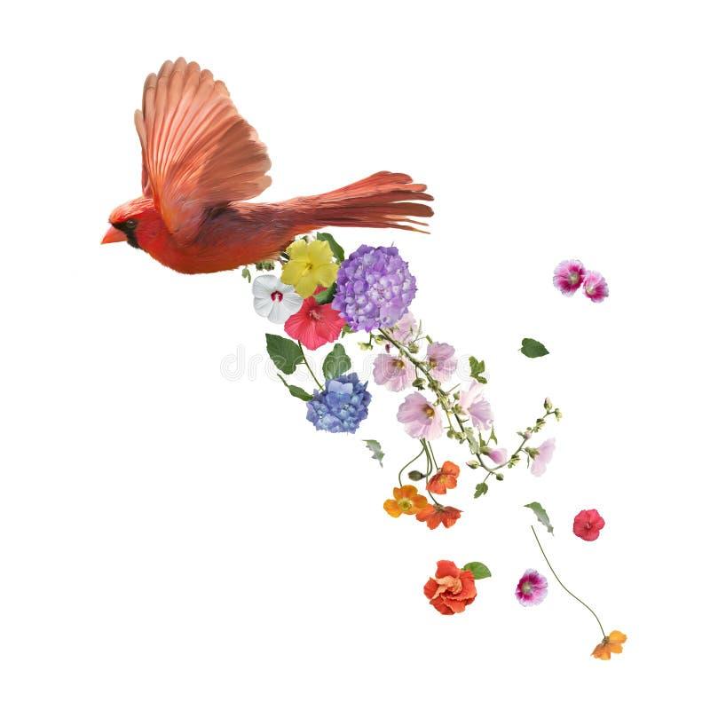 Północny Główny latanie z kwiatami, akwarela obraz na w zdjęcia stock