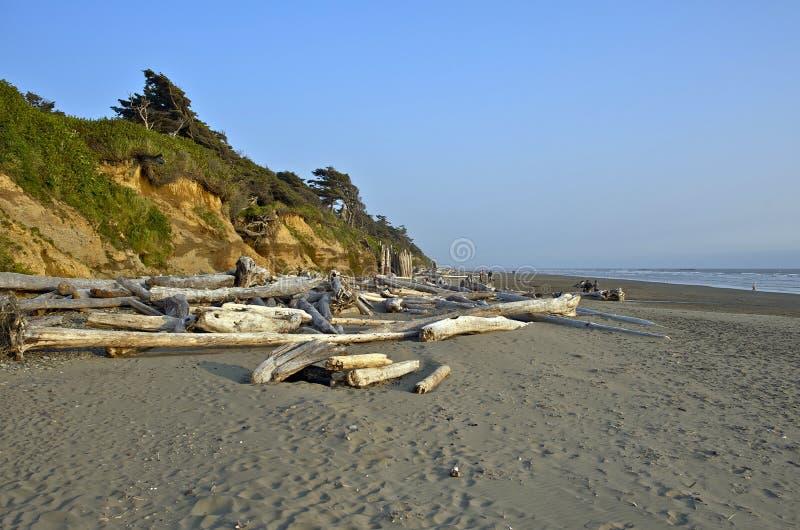 Północny Kalifornia plaży dryfu drewno zdjęcie royalty free
