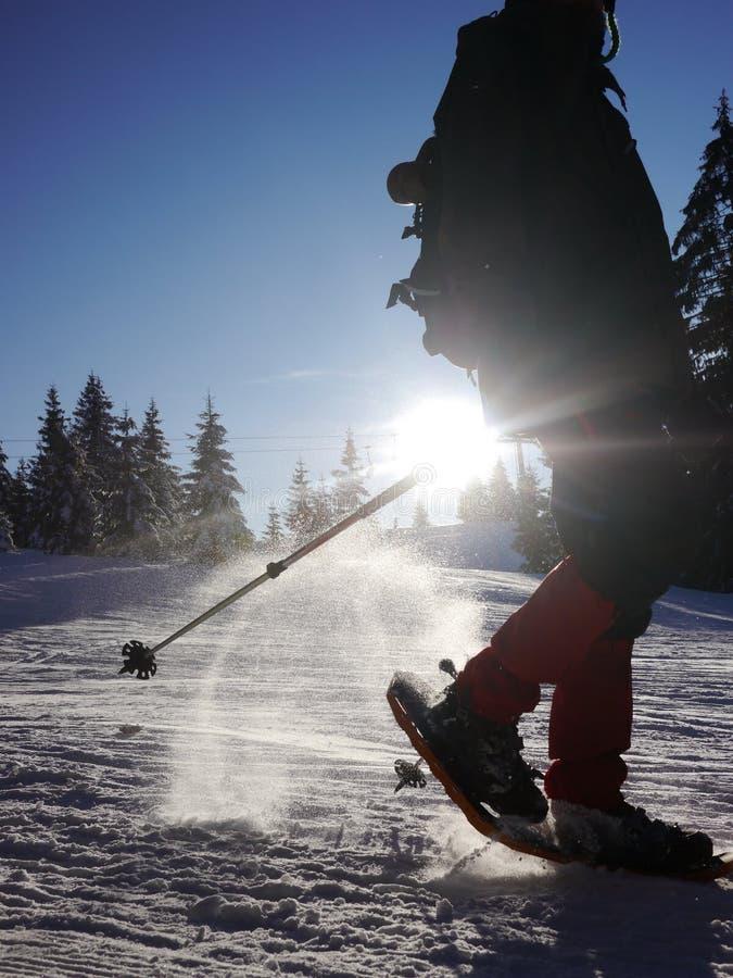 Północny piechura odprowadzenie na śniegu w zimie zdjęcie royalty free