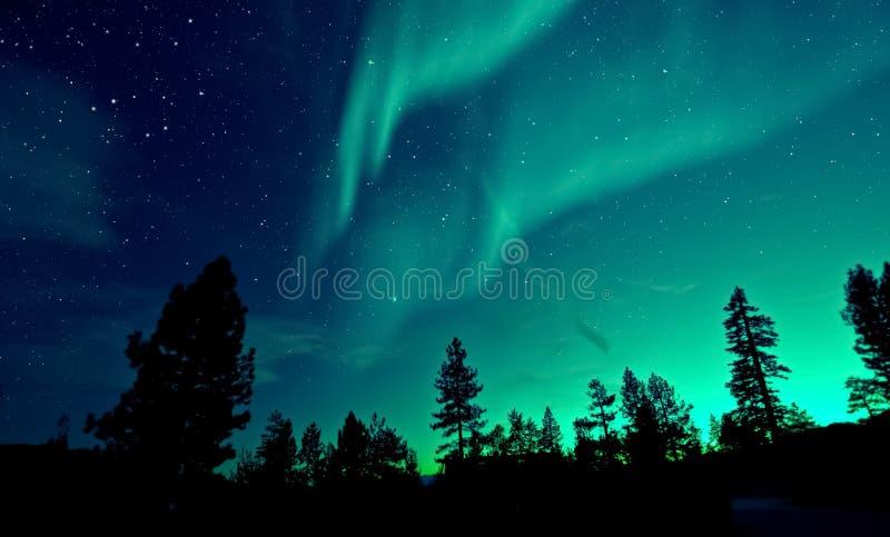 Północnych świateł zorzy borealis nad drzewami fotografia stock
