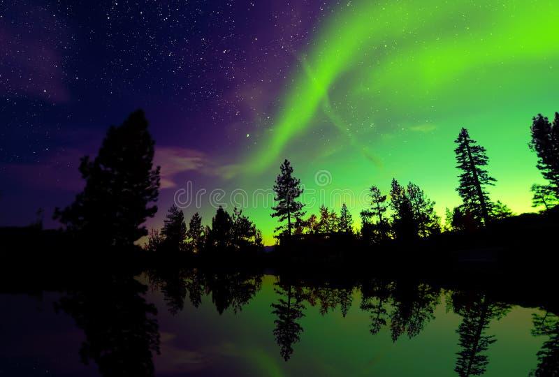 Północnych świateł zorzy borealis nad drzewami obrazy stock