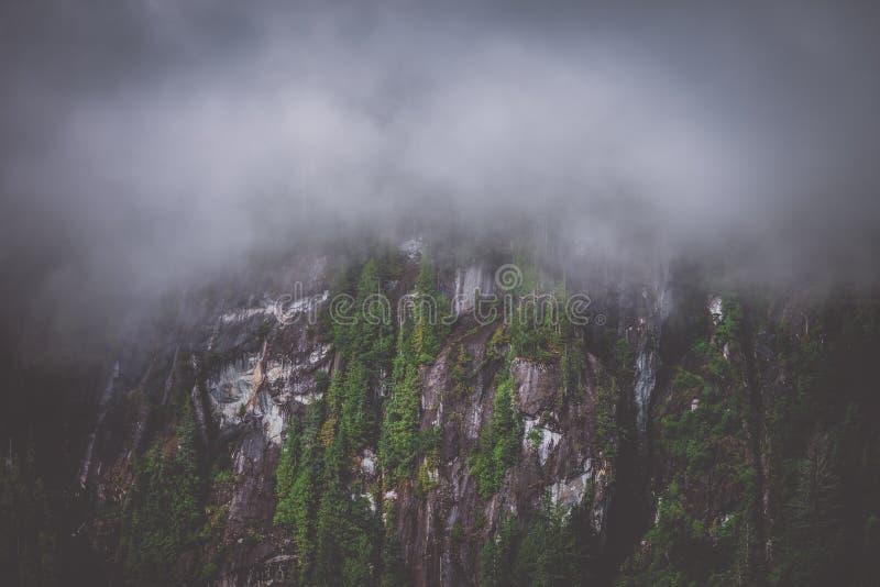 Północnych zachodów Mglistych Fjords Mgłowy las obraz stock
