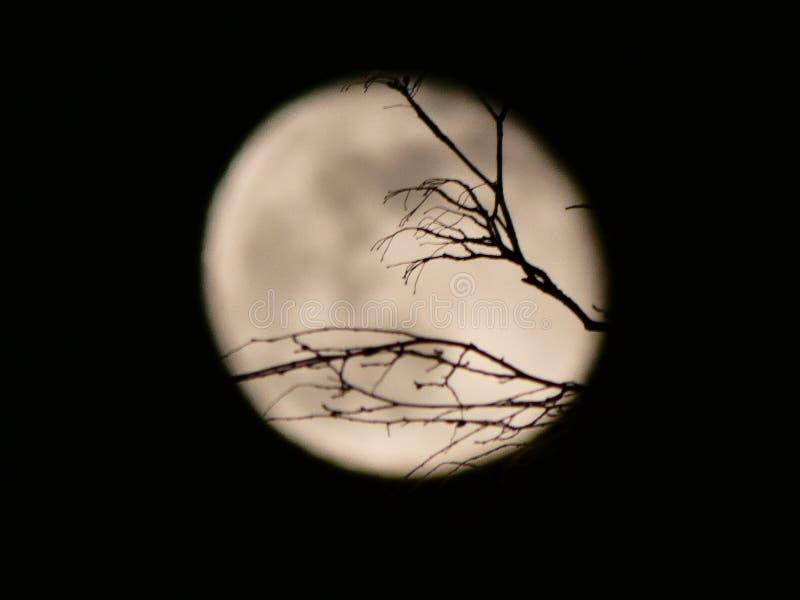 Północy księżyc w pełni fotografia royalty free
