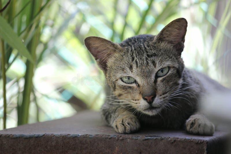 Półsenny kot obrazy stock