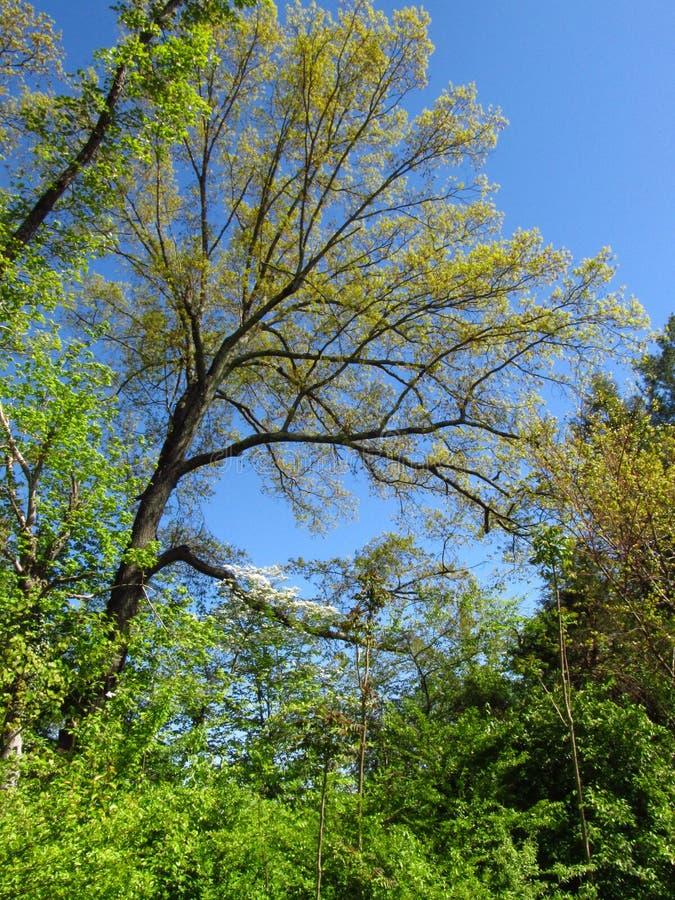 Późna wiosna na na Greenway zdjęcie royalty free