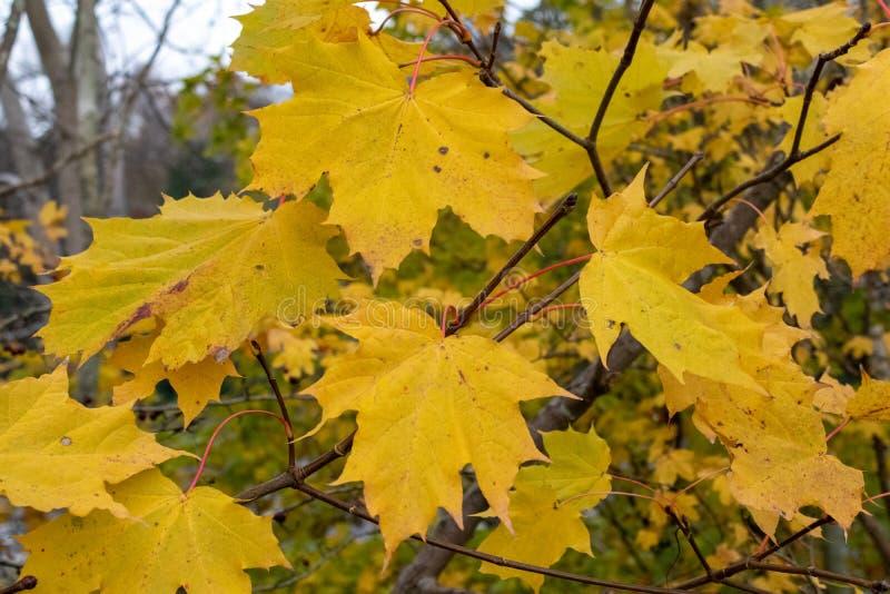 Późny jesienny dzień w Buchan Park Crawley Wielka Brytania fotografia royalty free