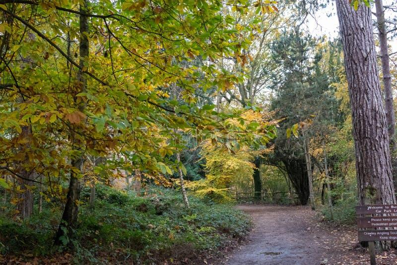 Późny jesienny dzień w Buchan Park Crawley Wielka Brytania obrazy royalty free
