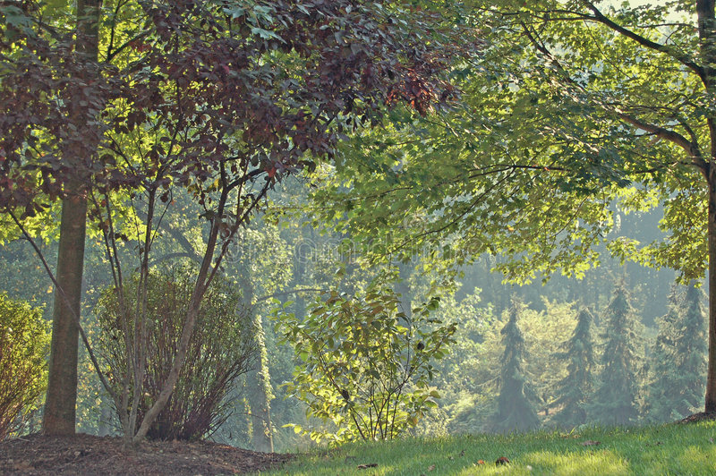 późnych lat drzewa fotografia stock