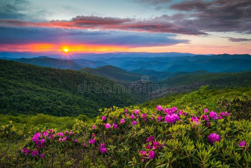 Pólnocna Karolina grani Parkway Błękitna wiosna Kwitnie Sceniczną górę fotografia stock
