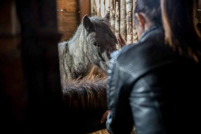 Pônei que senta-se na gaiola e que está ao lado de uma moça fotografia de stock royalty free