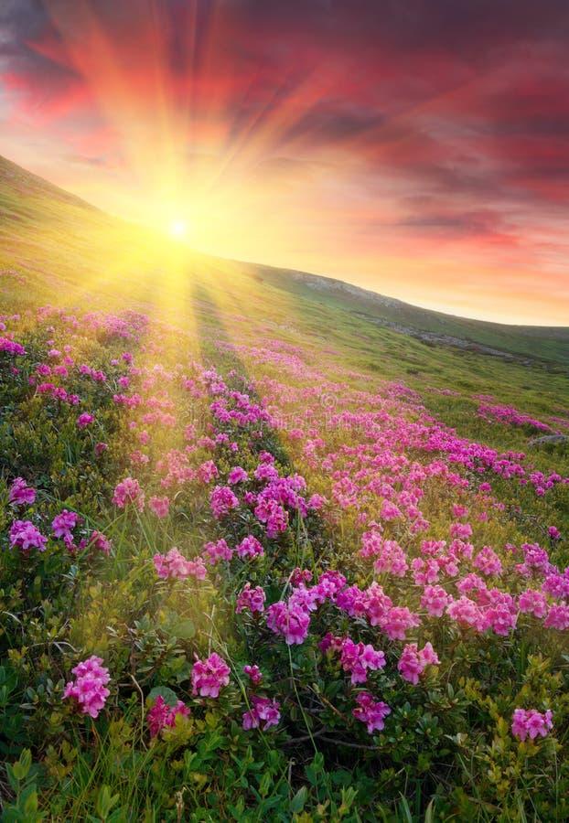 Pôr do sol colorido surpreendente nas montanhas com luz solar majestosa e imagens de stock royalty free