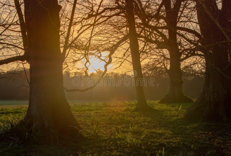 Pôr do sol no bosque fotografia de stock