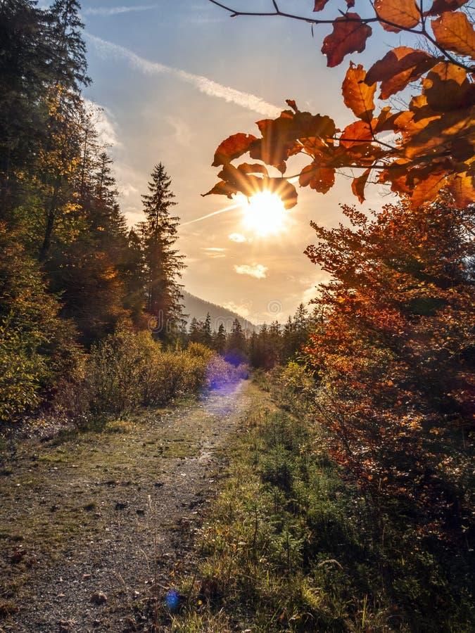 Pôr do sol sob folhagem vermelha no Vale a sul de Hintersee fotos de stock royalty free