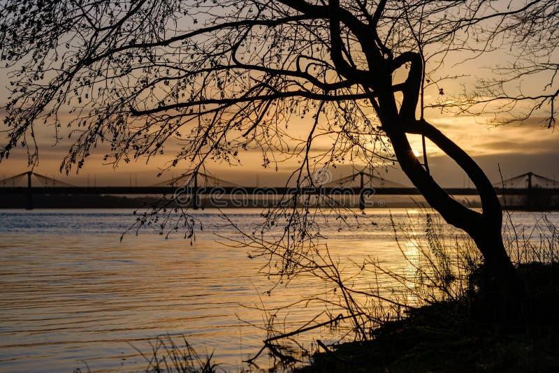 pôr do sol sobre a cidade com silhuetas de tronco de árvore escura na frente imagens de stock