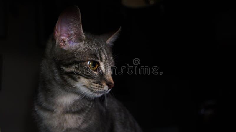 Põe luzes nesse gato! foto de stock royalty free