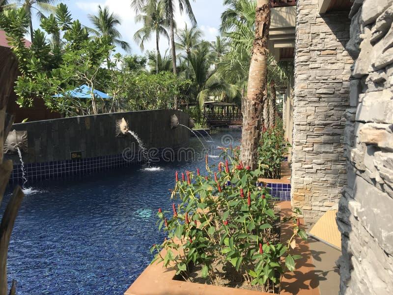 Pöl i en trädgård i Thailand royaltyfri fotografi