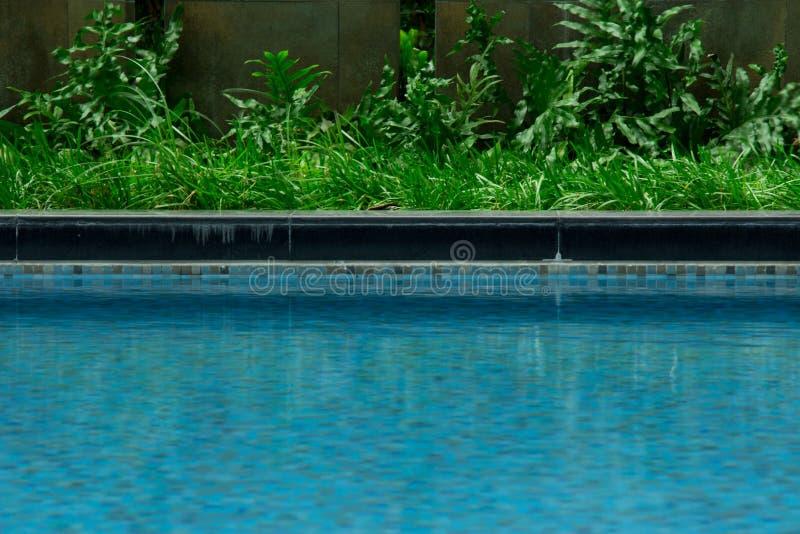 Pölkant med fridsamt seende gräs och trevlig ny djungelgree royaltyfria foton