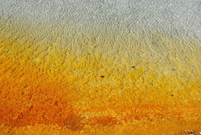 pölthermal yellowstone arkivbilder