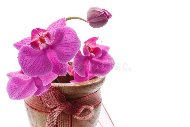 Púrpura del Phalaenopsis fotografía de archivo