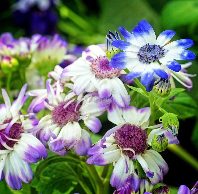 Púrpura y otras flores imágenes de archivo libres de regalías