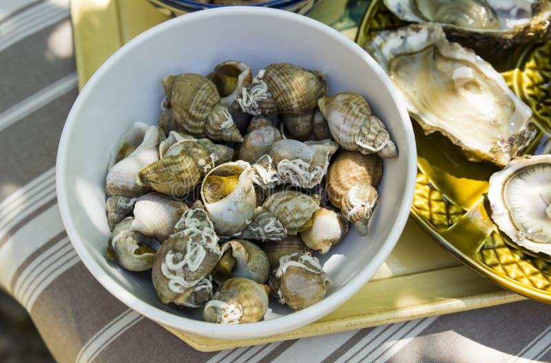 Pústulas, bulot, caracóis de mar, em pequeno uma bacia na tabela imagem de stock royalty free