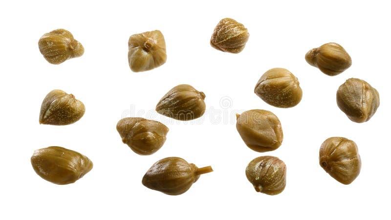 Pączki Capparis spinosa, ścieżka obraz royalty free