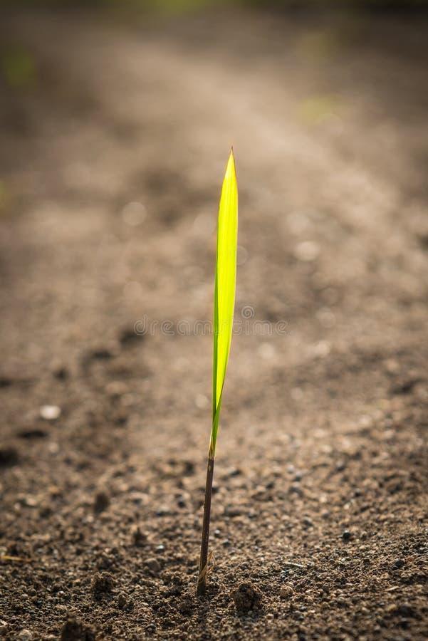 Pączkować rośliny obraz stock