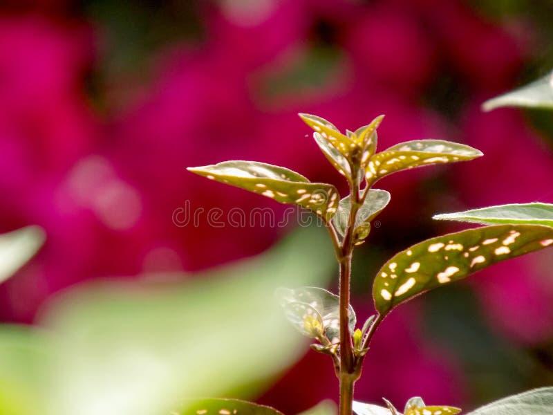 Pączkować rośliny na colourful tle zdjęcie royalty free