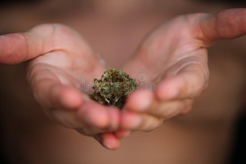 Pączkowy medyczny marihuany marihuany konopie thc zdjęcie royalty free
