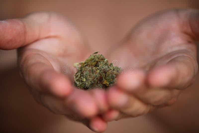 Pączkowy medyczny marihuany marihuany konopie thc obrazy royalty free