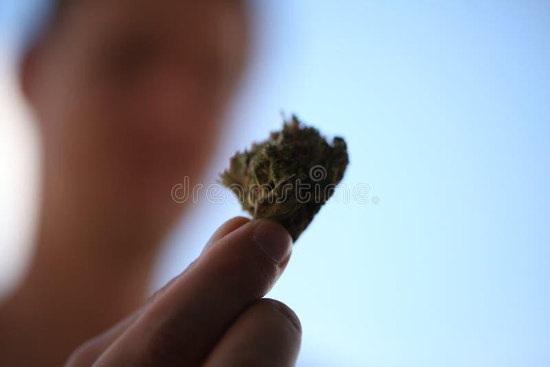 Pączkowy medyczny marihuany marihuany konopie thc zdjęcia royalty free