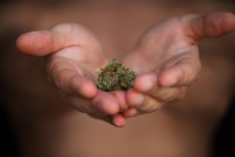 Pączkowy medyczny marihuany marihuany konopie thc fotografia stock
