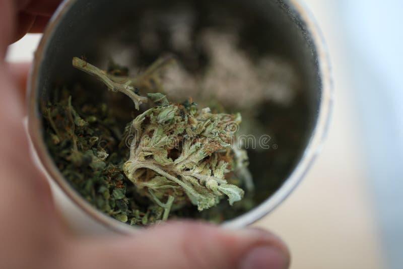 Pączkowy medyczny marihuany marihuany konopie thc zdjęcia stock