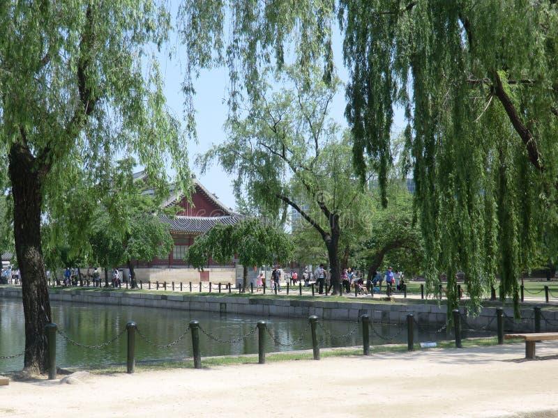 Płacze Wierzbowi drzewa jeziorem W Seul obraz stock