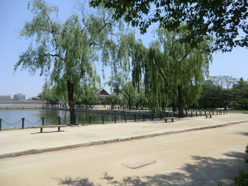 Płacze Wierzbowi drzewa Na krawędzi jeziora W Seul, Południowy Korea obraz stock
