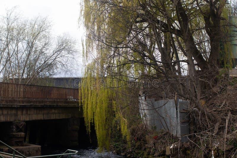 Płacze wierzbowy drzewo i most zdjęcia royalty free