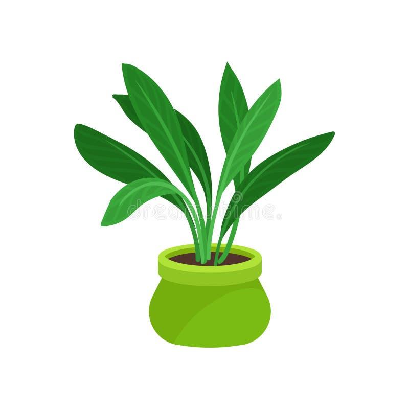 Płaska wektorowa ikona aspidistra roślina z długim ulistnieniem Houseplant w jaskrawym - zielony ceramiczny garnek Element dla bi ilustracja wektor