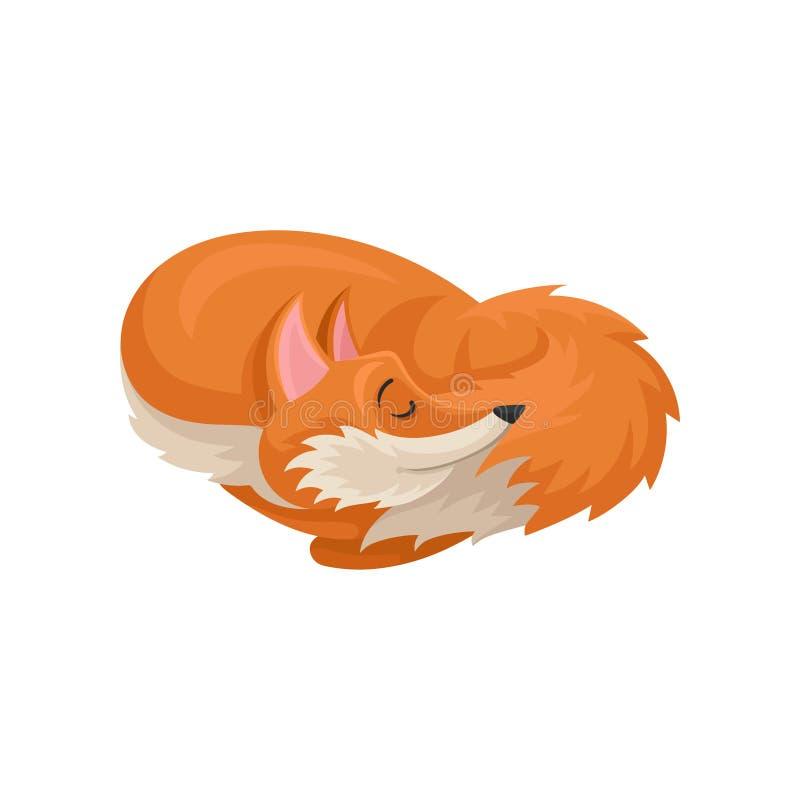 Płaska wektorowa ikona dosypianie fryzował w górę lisa Lasowy zwierzę z jaskrawym pomarańczowym żakietem Śliczny postać z kresków ilustracji