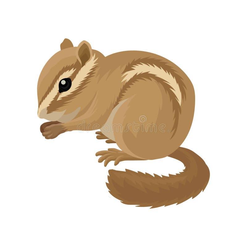 Płaska wektorowa ikona mały brown chipmunk Mały ssaka zwierzę Ślepuszonka z policzek kieszonkami i lampasami światła i zmroku royalty ilustracja