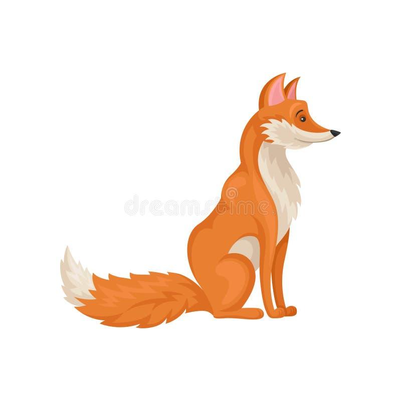 Płaska wektorowa ikona siedzieć czerwonego lisa, boczny widok Ssaka zwierzę z puszystym ogonem Dzika istota Lasowy fauna temat ilustracja wektor