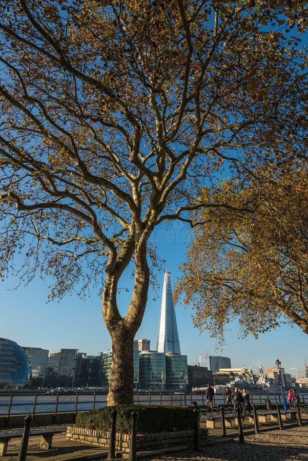 Płaski drzewo w Londyn obrazy royalty free