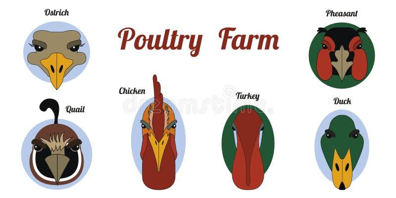Płaski ikony farma drobiu royalty ilustracja