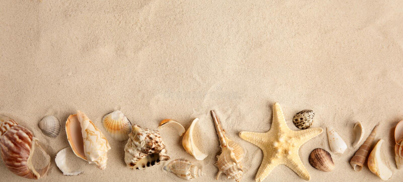 PÅ'aski kompozycja z piÄ™knymi skorupami z rozgwiazd na piasku, miejsce na tekst zdjęcie royalty free