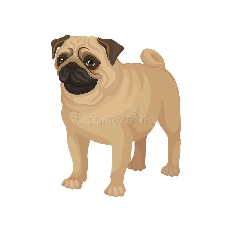 Płaski wektorowy portret trwanie mopsa szczeniak Domowy zwierzę domowe Mały domowy pies z śliczną marszczącą twarzą i fryzującym  royalty ilustracja