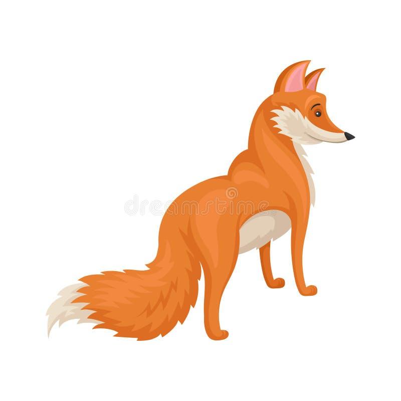 Płaski wektorowy projekt stać jaskrawego czerwonego lisa, tylny widok Dziki lasowy zwierzę Przyroda temat royalty ilustracja