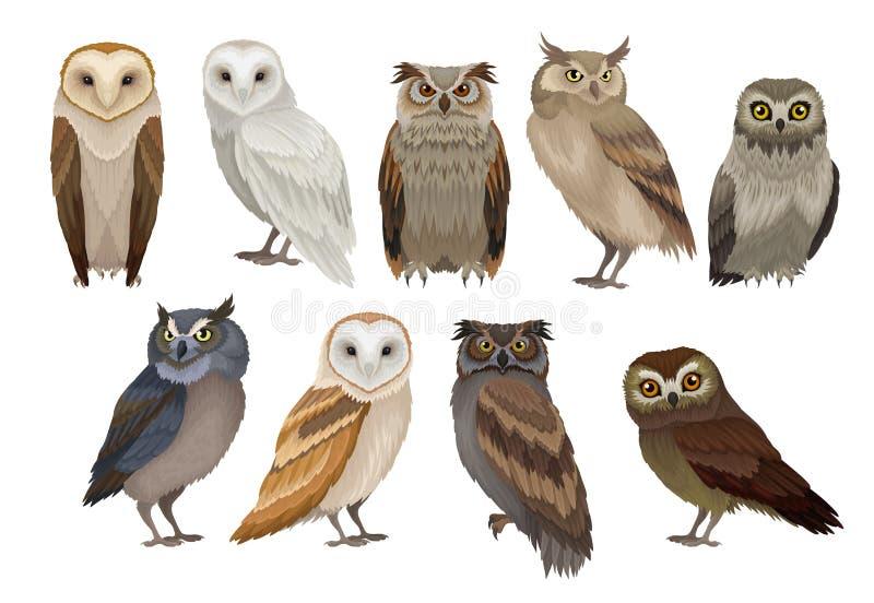 Płaski wektorowy ustawiający różni gatunki sowy Dzicy lasowi ptaki Latające istoty Elementy dla ornitologii książki ilustracja wektor