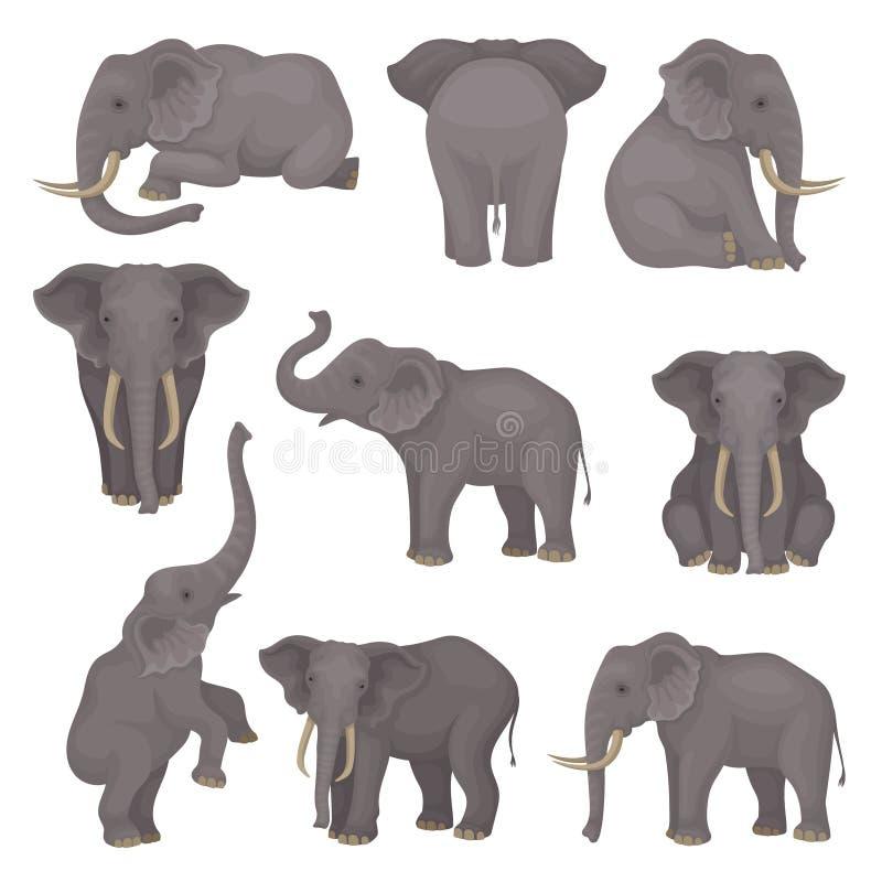 Płaski wektorowy ustawiający słonie w różnych pozach Afrykanin Azjatyccy zwierzęta z wielkimi ucho i długimi bagażnikami przyroda royalty ilustracja