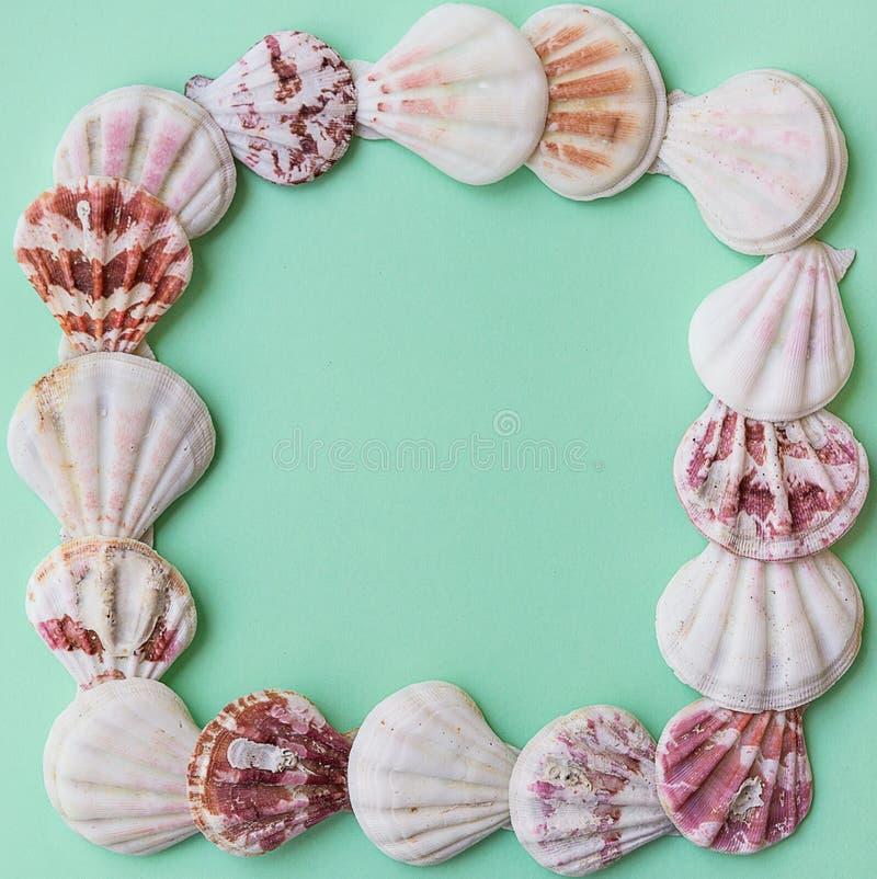 Płaskie biel menchii brązu morza skorupy układali w ramie na jasnozielonym turkusowym pastelowym tle Odbitkowa przestrzeń, szablo obraz royalty free