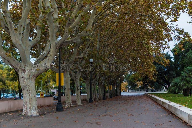 Płaskiego drzewa aleja na Mirador del Palau Nacional ulicie, Barcelona obrazy royalty free