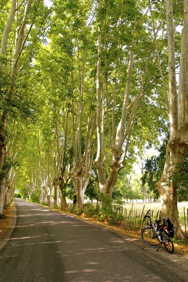Płaskiego drzewa aleja z bicyklem, Provence zdjęcia royalty free